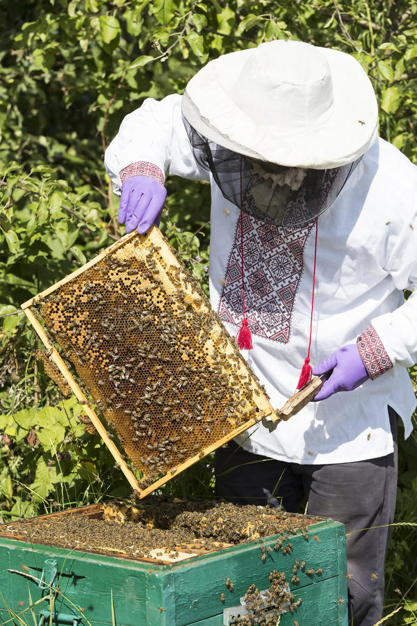 A man works in an apiary. Collecting bee honey royalty free stock photos