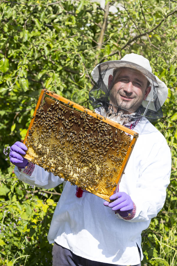 A man works in an apiary. Collecting bee honey royalty free stock images
