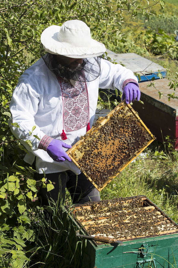 A man works in an apiary. Collecting bee honey royalty free stock photo