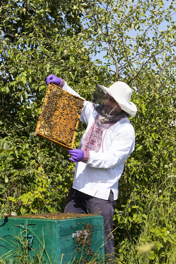 A man works in an apiary. Collecting bee honey stock images