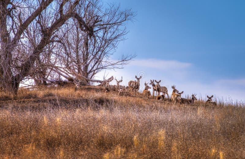 Manada de ciervos debajo de un árbol fotos de archivo libres de regalías