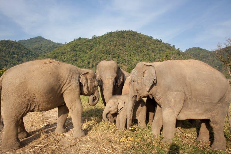 Manada de elefantes en Tailandia fotos de archivo libres de regalías