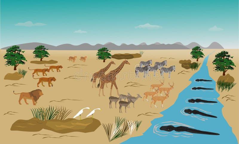 Manada de los animales que se colocan en el río Porque está corrido hacia fuera Del enjambre de leones Y el cocodrilo en el agua ilustración del vector