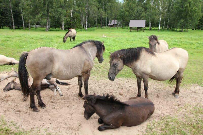 Manada del caballo foto de archivo libre de regalías