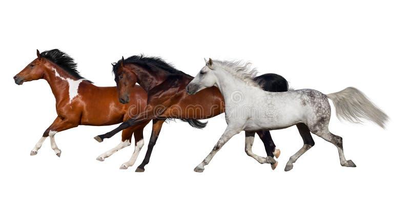 Manada del caballo aislada foto de archivo
