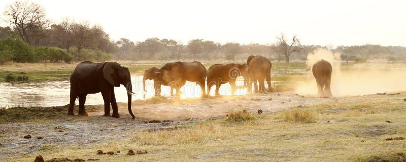 Manada del elefante africano fotos de archivo libres de regalías