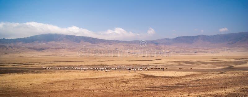 Manadas de ovejas en un valle fotografía de archivo