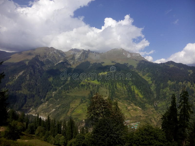Manali小山它的秀丽植物群 免版税库存照片