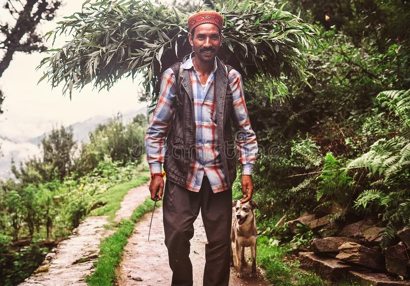 Manali, Himachal Pradesh, India - August 27, 2016: Indian loca. L man carries the basket with tree leaves and branches to feed the own livestock in Manali royalty free stock photo