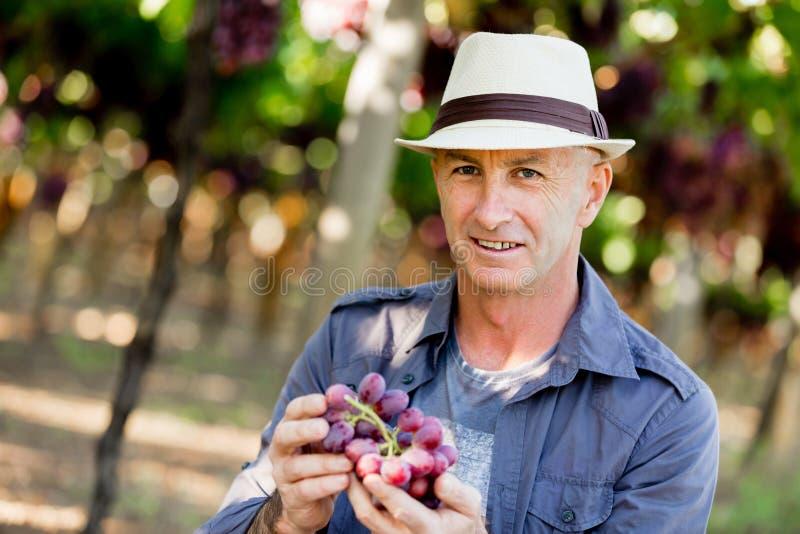 Mananseende i vingård fotografering för bildbyråer