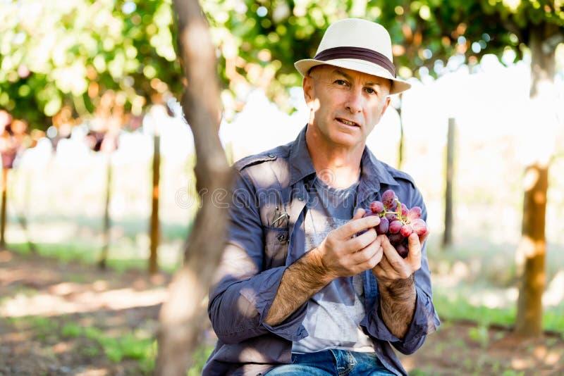 Mananseende i vingård royaltyfria foton