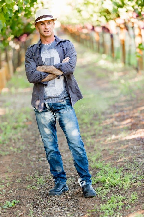 Mananseende i vingård arkivbilder