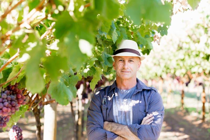 Mananseende i vingård royaltyfri foto