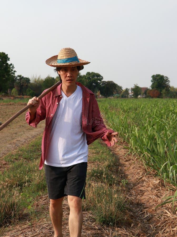 Manbonde med hackan i hand som går i sockerrörlantgården och bär en sugrörhatt arkivfoto