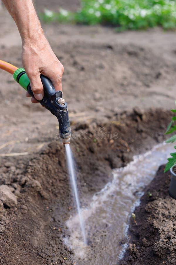Manbonde som utomhus bevattnar tomater och pepparplantor i trädgården fotografering för bildbyråer