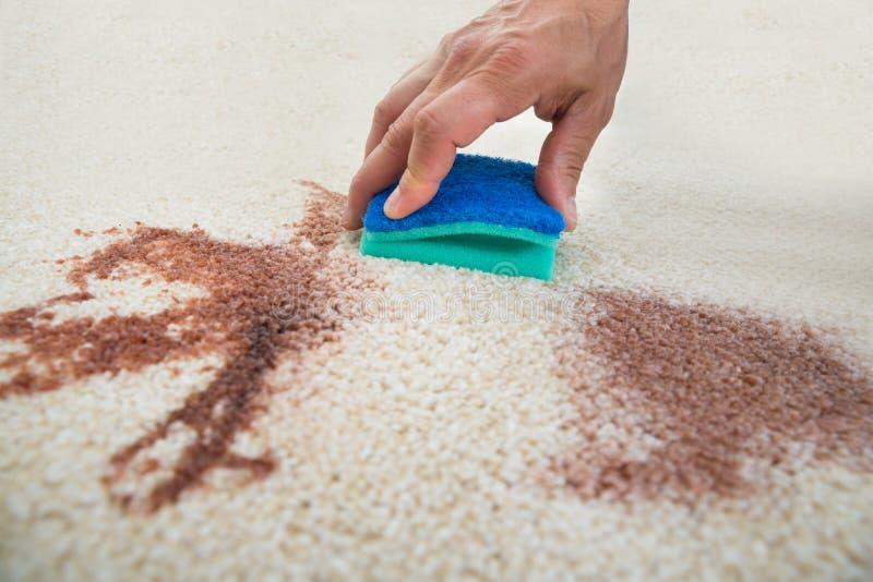 Mancha de la limpieza del hombre en la alfombra con la esponja fotografía de archivo libre de regalías