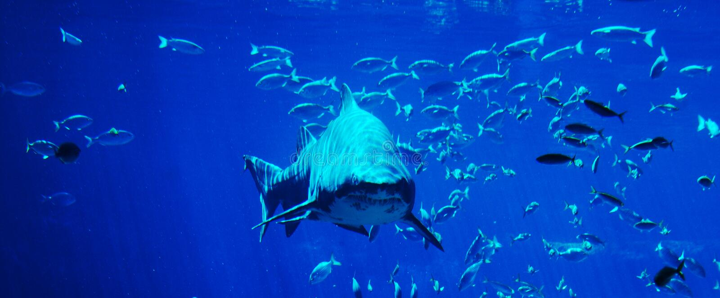 Mancha do tubarão imagens de stock