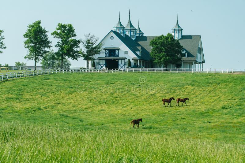 Horse bluegrass grazing at Manchester Farm in Lexington Kentucky. Manchester Farm and horses grazing in Lexington Kentucky at sunrise in bluegrass country during stock image