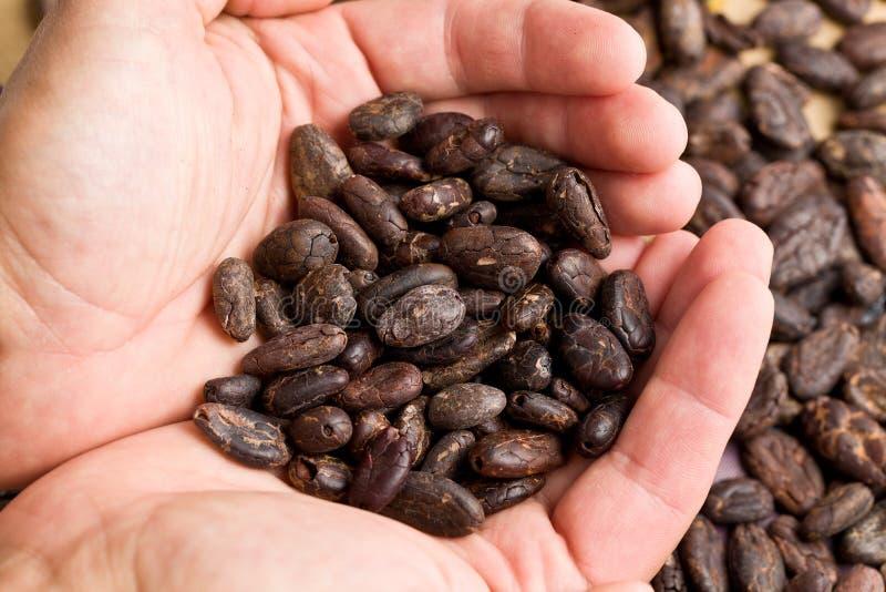 Manciata di fagioli del cacao fotografie stock libere da diritti