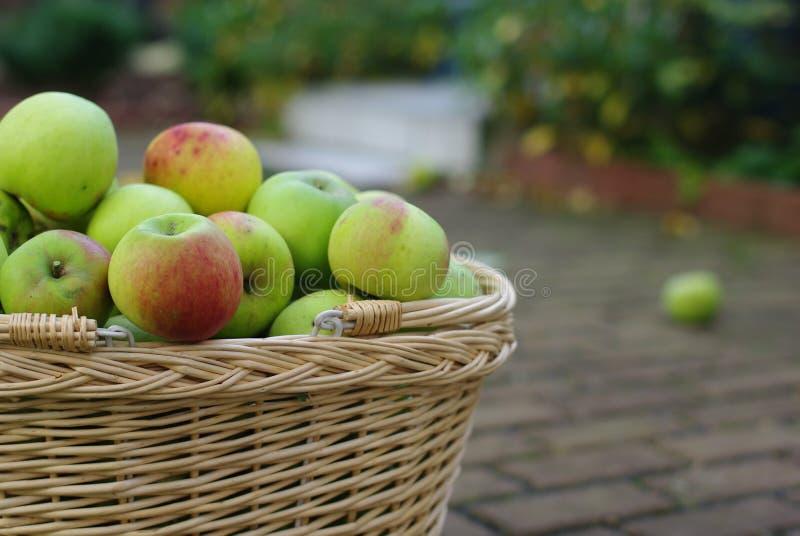 Mand met appelen royalty-vrije stock foto's