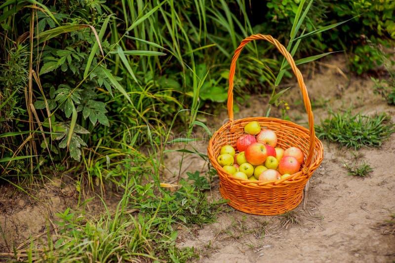Mand met appelen op een weg stock afbeeldingen