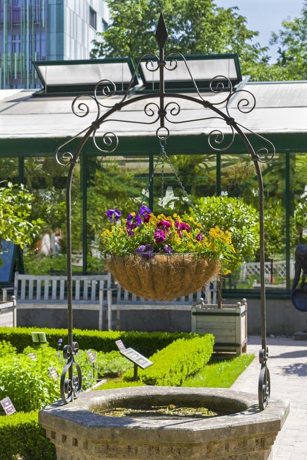Mand met een het bloeien violette tricolor royalty-vrije stock afbeeldingen