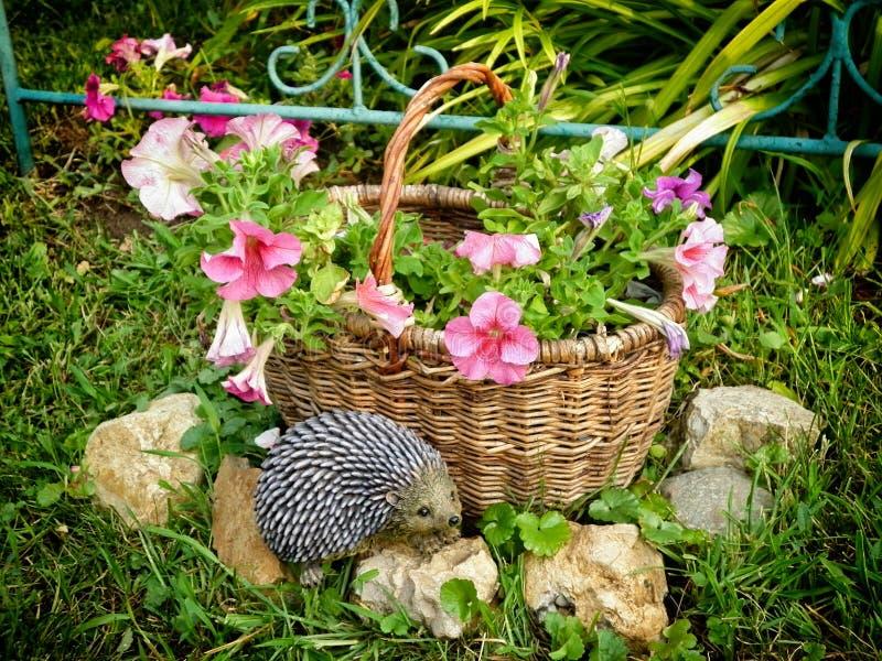 Mand met roze Petuniabloemen Het ontwerp van infield royalty-vrije stock fotografie