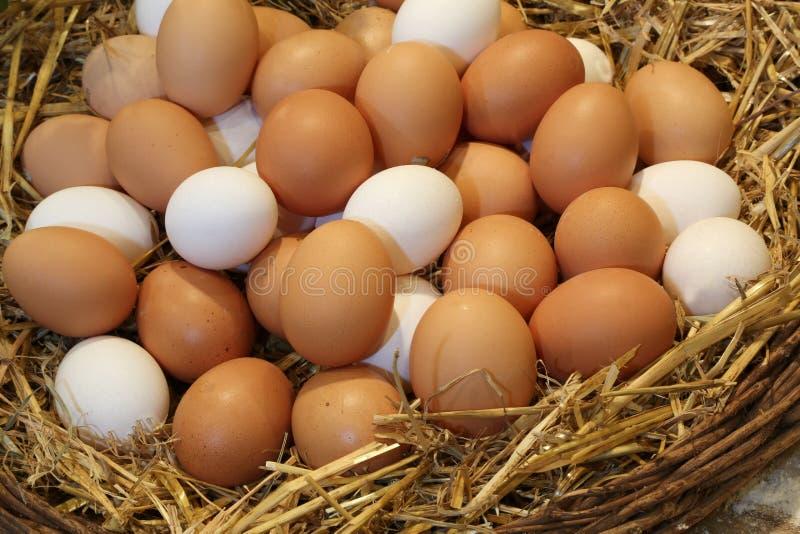 Mand met verse kippeneieren in het landbouwbedrijf van organische opbrengst stock afbeeldingen