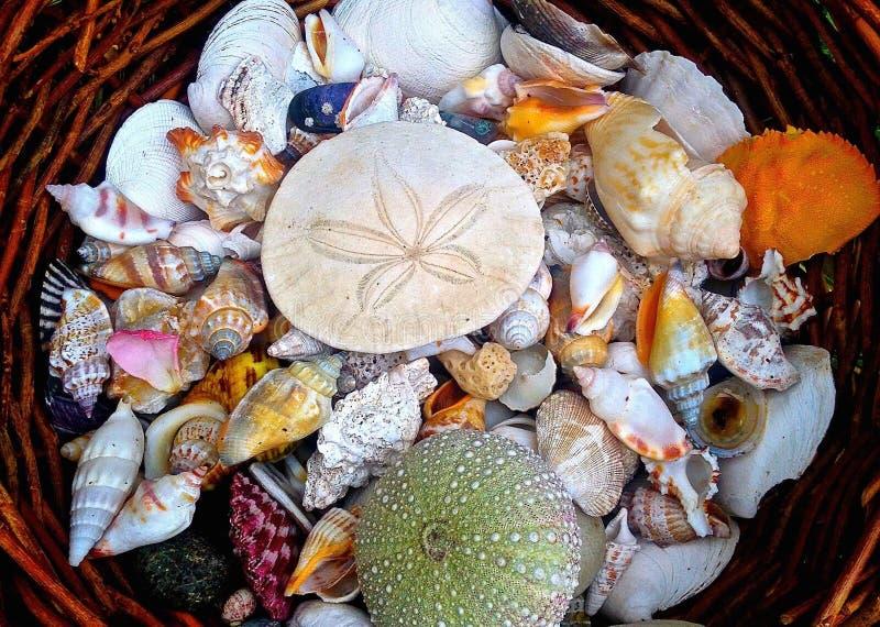 Download Mand van shells in tuin stock afbeelding. Afbeelding bestaande uit tuin - 54084583