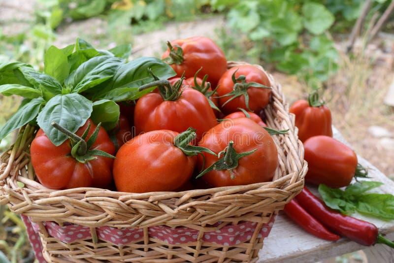 Mand van tomaten in een moestuin royalty-vrije stock foto's