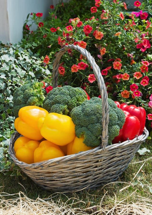 Mand van verse groenten stock afbeeldingen