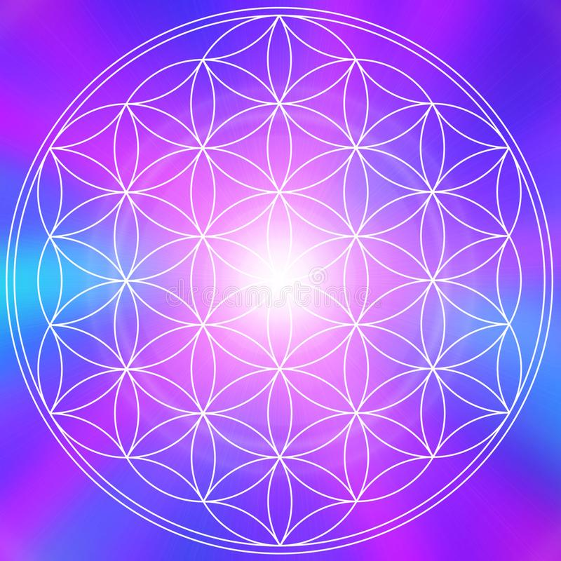 Mandala λουλουδιών ζωής στοκ εικόνα