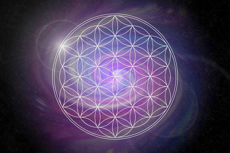 Mandala λουλουδιών ζωής στοκ φωτογραφία με δικαίωμα ελεύθερης χρήσης