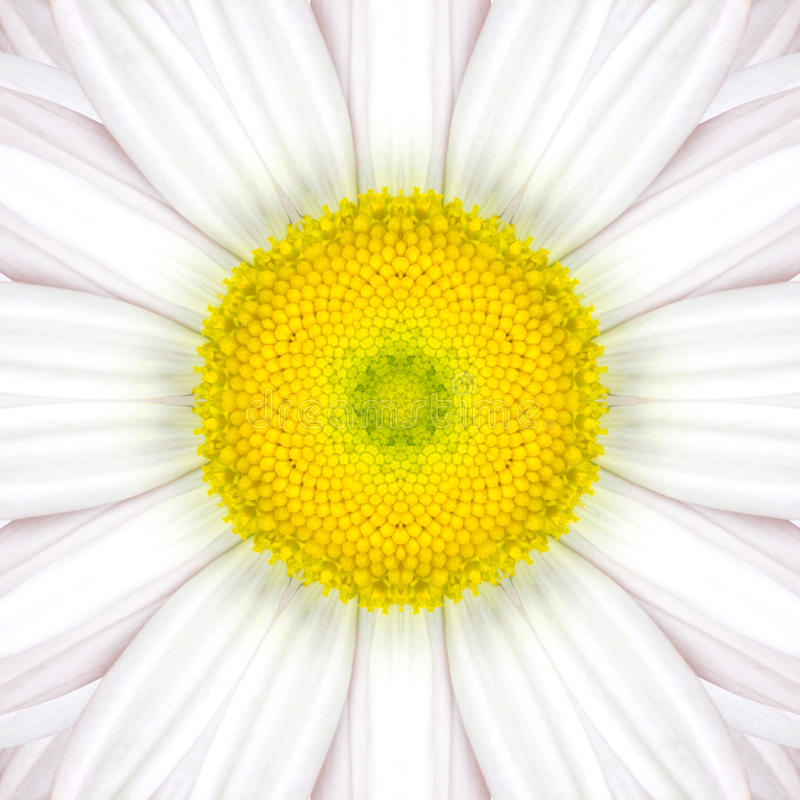 Mandala Concentric Flower Center Kaleidoscope blanche photographie stock