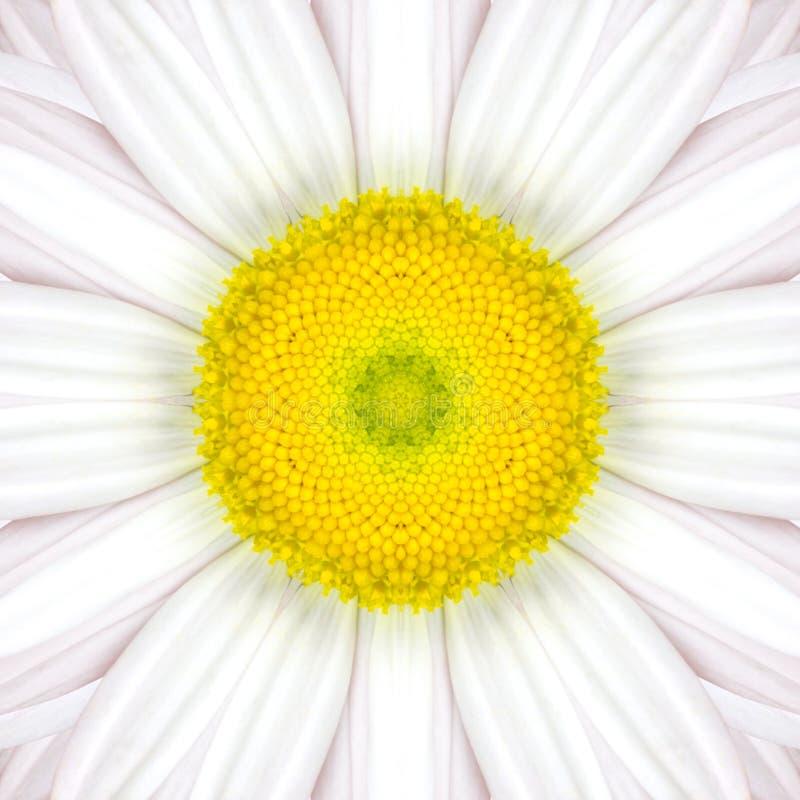 Mandala Concentric Flower Center Kaleidoscope branca fotografia de stock