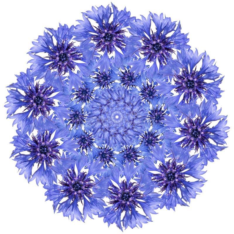 Mandala da flor Projeto circular azul da centáurea foto de stock royalty free
