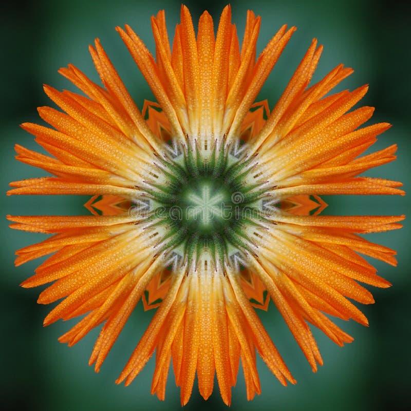 Mandala del fiore del Calendula illustrazione di stock