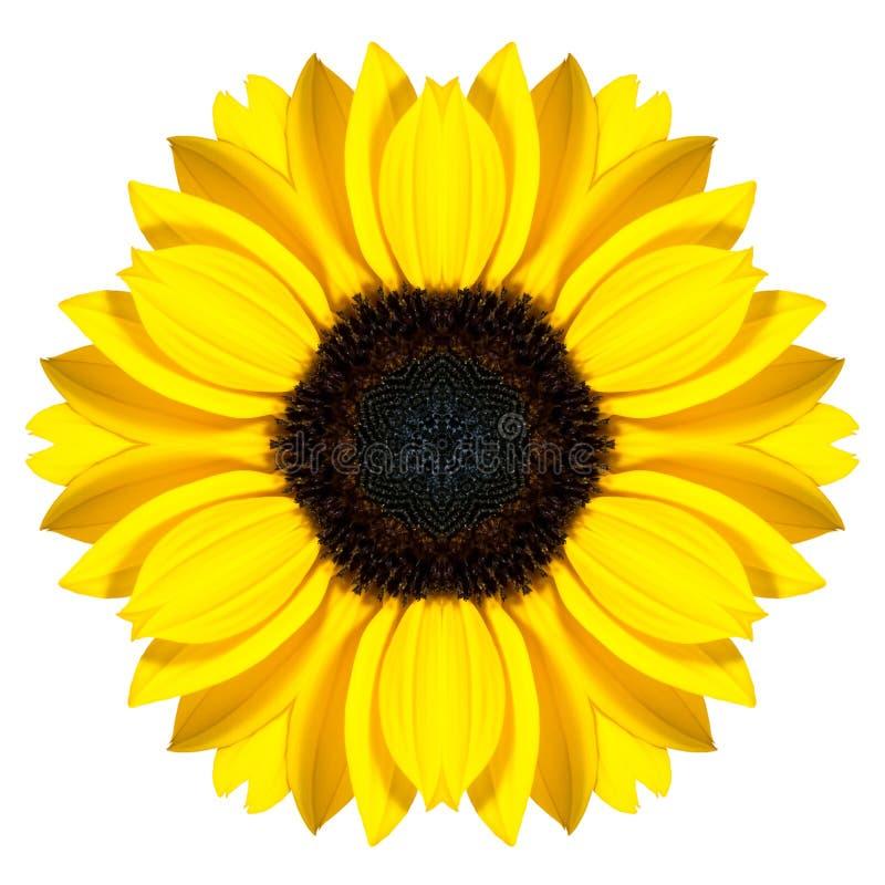 Mandala Sunflower Flower Kaleidoscope Isolated sur le blanc images stock