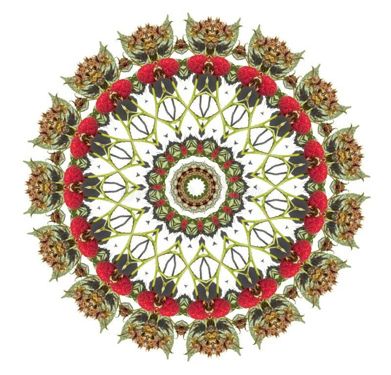 Mandala van de framboos stock illustratie