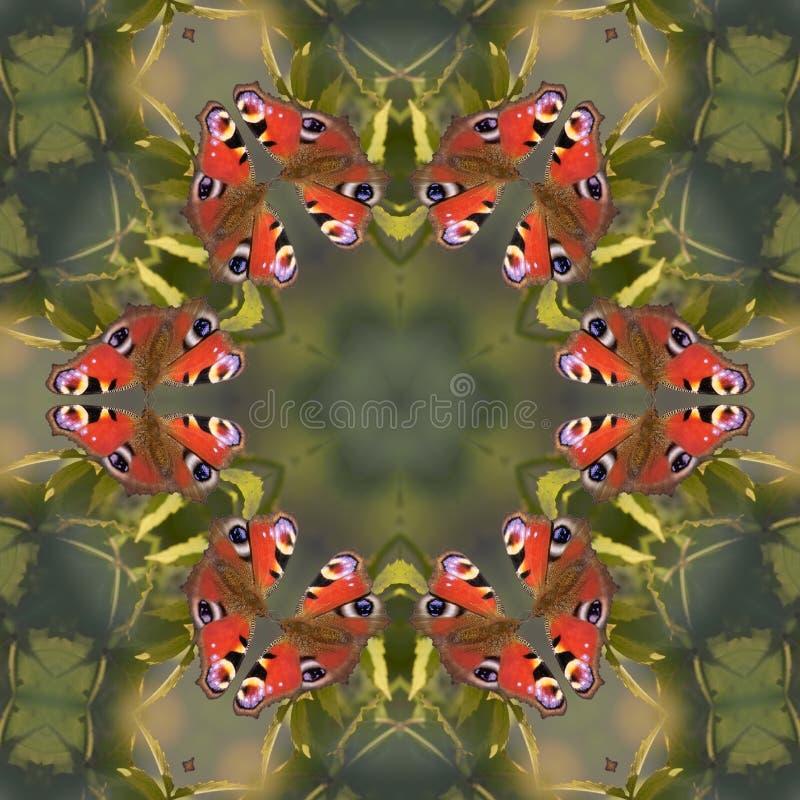 Download Mandala van de vlinder stock illustratie. Illustratie bestaande uit rotatie - 283855