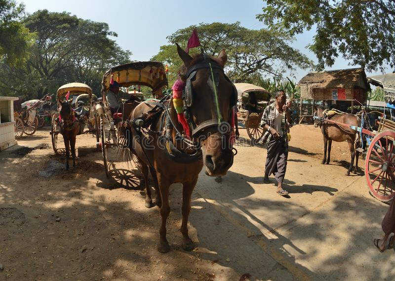 Mandalay Oe Toke Tan pony cart taxi. Myanmar Mandalay Oe Toke Tan pony cart taxi royalty free stock images