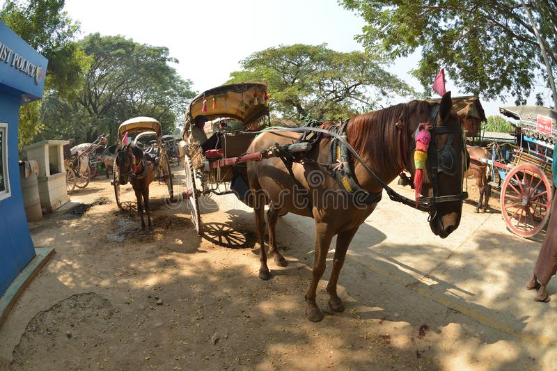 Mandalay Oe Toke Tan pony cart taxi. Myanmar Mandalay Oe Toke Tan pony cart taxi stock photography