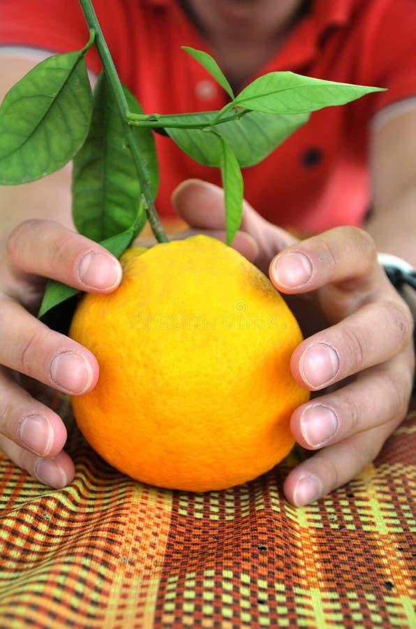 Mandarín, anaranjado con una ramita y un a mano masculino de las hojas - consiguiendo listo para el concepto de la Navidad y de l fotos de archivo