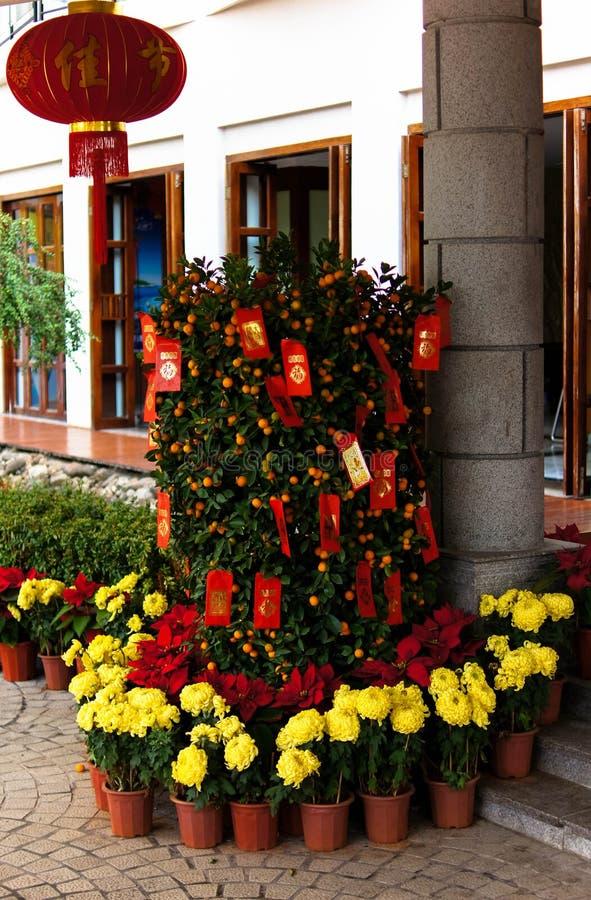 Mandarijnboom royalty-vrije stock afbeelding