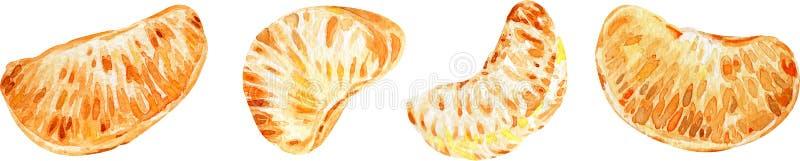 Mandarijnplakken Citrusvruchten die op witte achtergrond worden geïsoleerdt De illustratie van de waterverf royalty-vrije illustratie