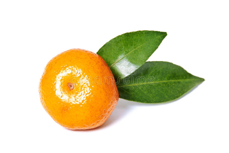 Download Mandarin stock photo. Image of juicy, mandarin, leaf - 28557372