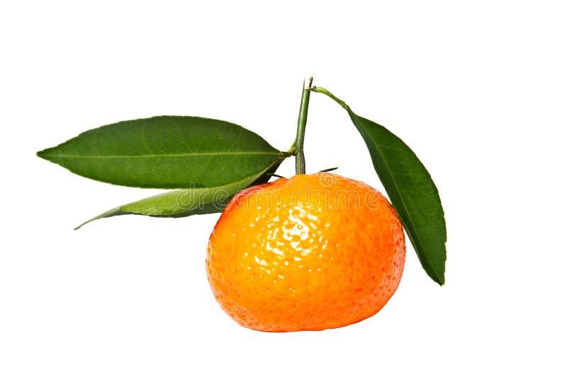 Download Mandarin stock photo. Image of citrus, refreshing, ripe - 28557374