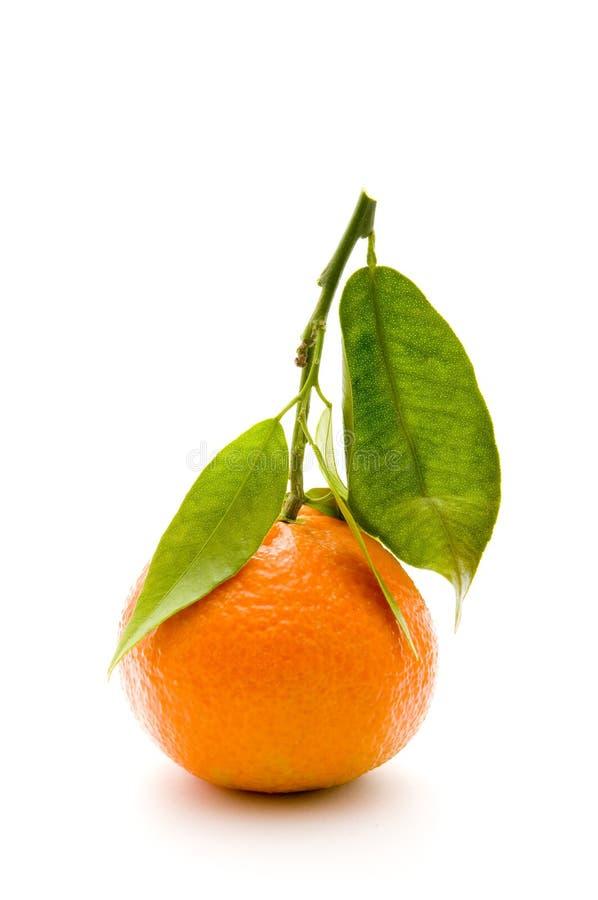Download Mandarin with branch stock image. Image of fresh, organic - 12520517
