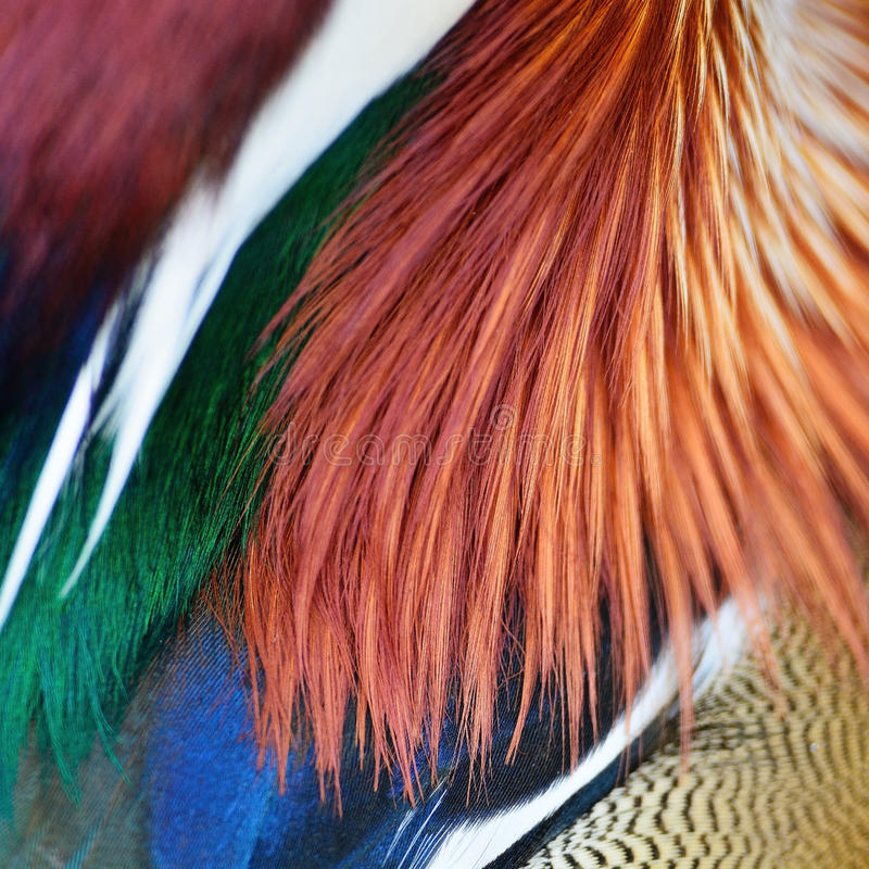 Mandarin Duck feathers. Colorful Mandarin Duck feathers, texture abstract background royalty free stock images