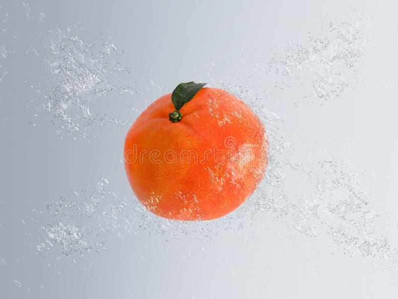 Mandarin eller clementine i vatten vektor illustrationer